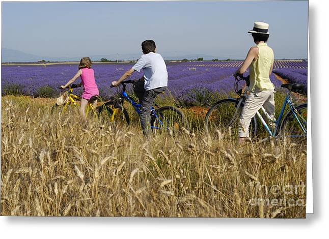 Family Contemplating Lavender Field During Bicycle Trip Greeting Card