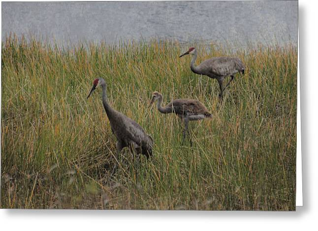 Family Of Three Greeting Card by Rosalie Scanlon