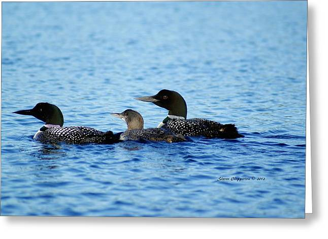 Greeting Card featuring the photograph Family Swim 3 by Steven Clipperton