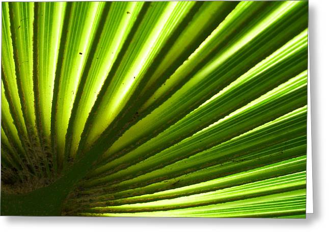 Greeting Card featuring the photograph Fan Frond by Ginny Schmidt