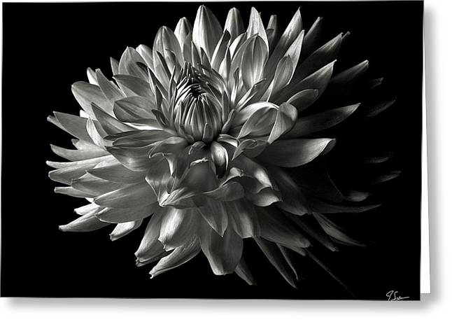 Fancy Dahlia In Black And White Greeting Card
