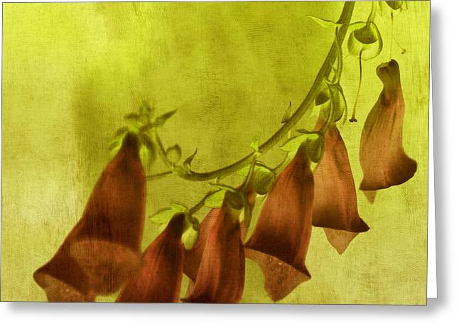 Fancy Foxglove Greeting Card by Bonnie Bruno