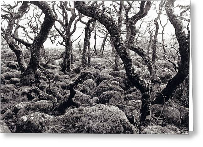 Fangorn Forest Black A Tor Copse Dartmoor Greeting Card by Rachel Burch