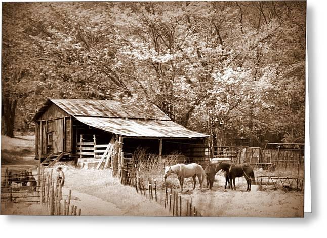 Farm And Barn Greeting Card by Marty Koch
