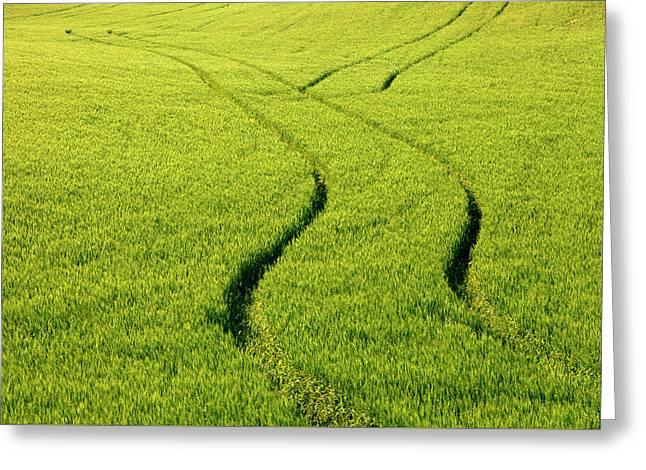 Farm Tracks Greeting Card by Mike  Dawson