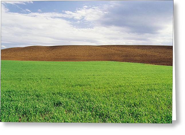 Farmland With Early Growth Grain Greeting Card by Dave Reede