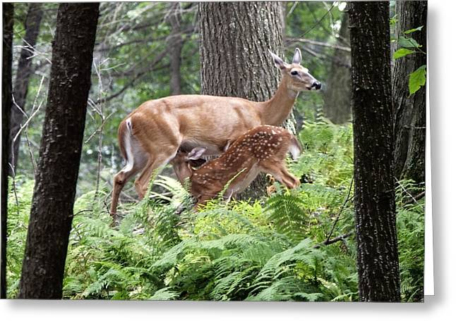 Greeting Card featuring the photograph Fawn by David Lester