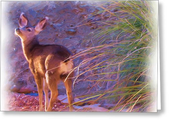 Fawn In Last Light Greeting Card by FeVa  Fotos