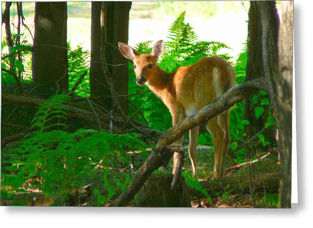 Fawn In The Woods Greeting Card by Artistic Photos