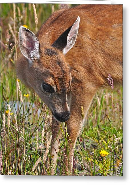 Fawn Meets Fly Greeting Card by Guy Kimola