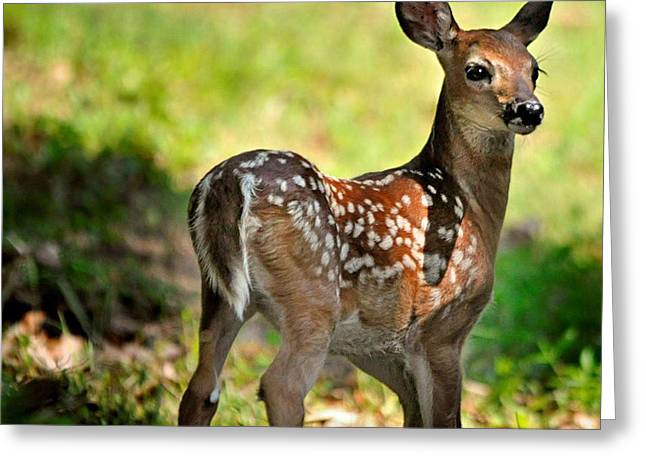 Fawn Toddler Greeting Card by Nava Thompson