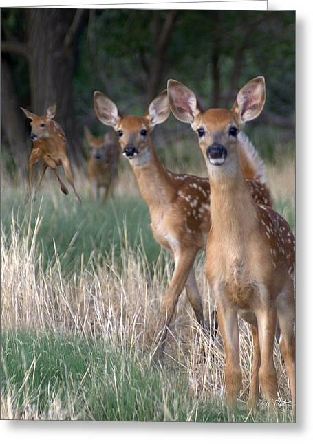 Fawns Fawns Greeting Card by Bill Stephens