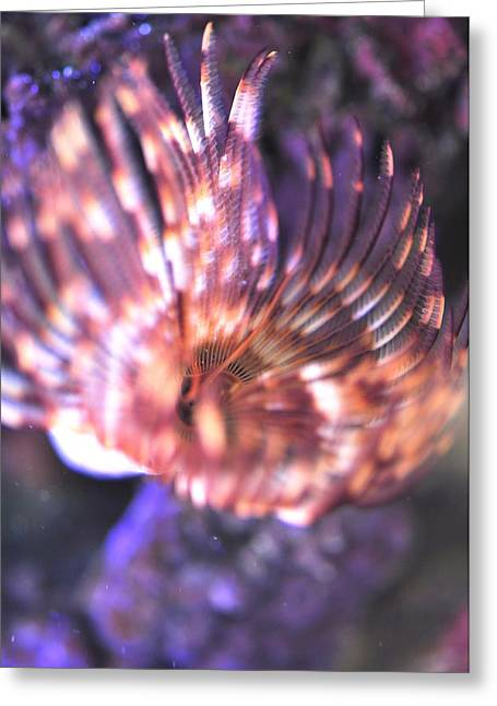 Greeting Card featuring the photograph Feather Duster  by Puzzles Shum