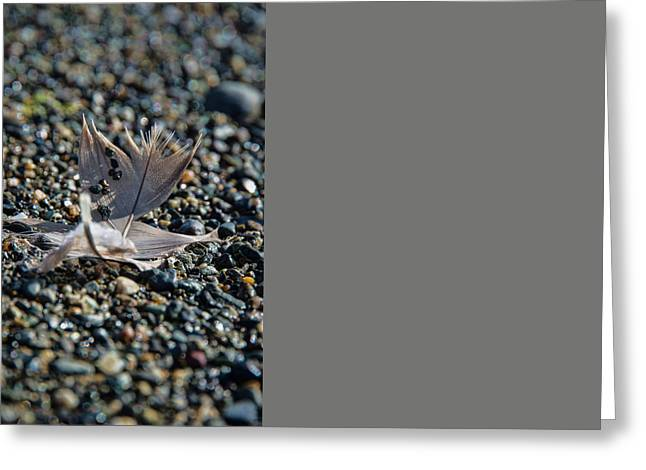 Greeting Card featuring the photograph White Feather by Marilyn Wilson