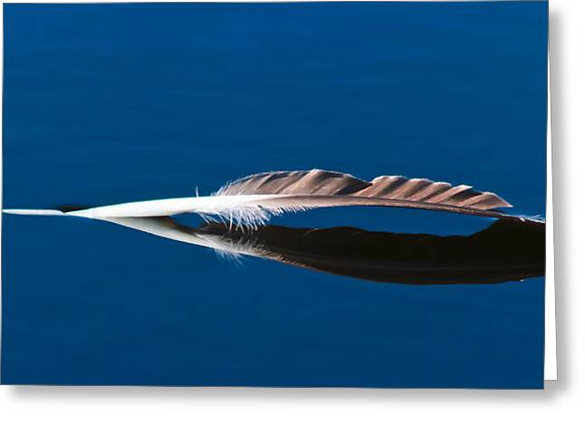 Feather Greeting Card by Mitch Shindelbower