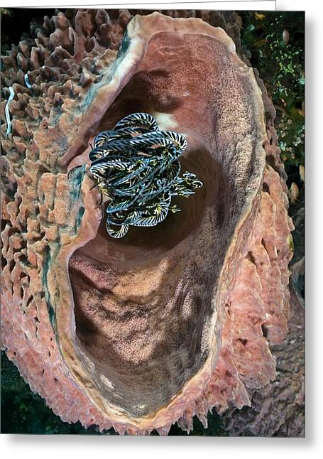 Feather Star And Barrel Sponge Greeting Card by Matthew Oldfield