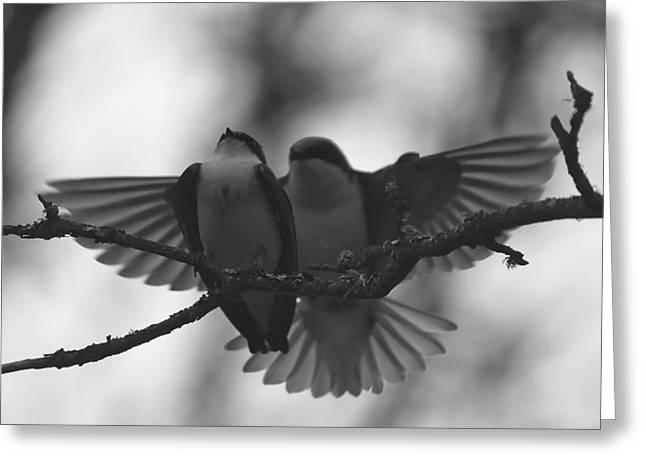 Feathered Encounter Greeting Card by Angie Vogel