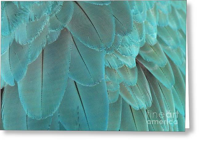Feathery Turquoise Greeting Card by Sabrina L Ryan