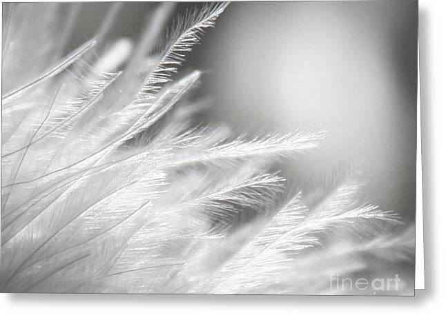 Feathery White Greeting Card