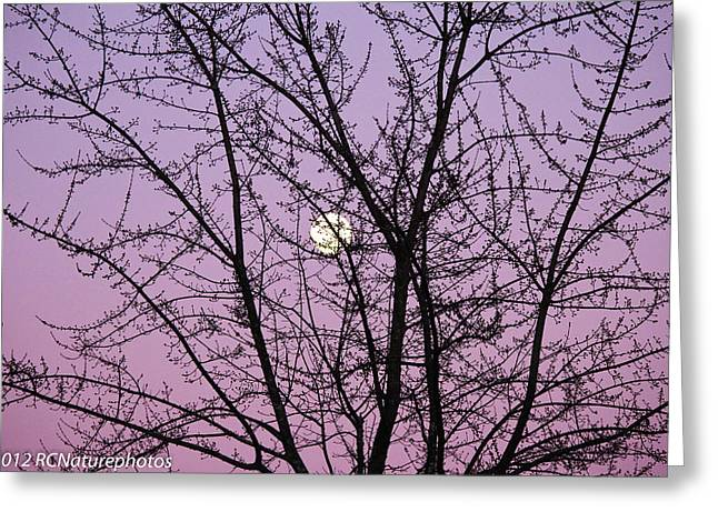 Greeting Card featuring the photograph February's Full Moon by Rachel Cohen