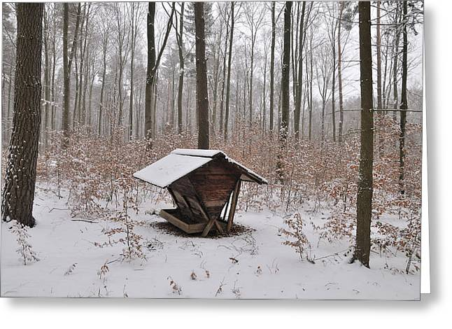 Feed Box In Winterly Forest Greeting Card by Matthias Hauser