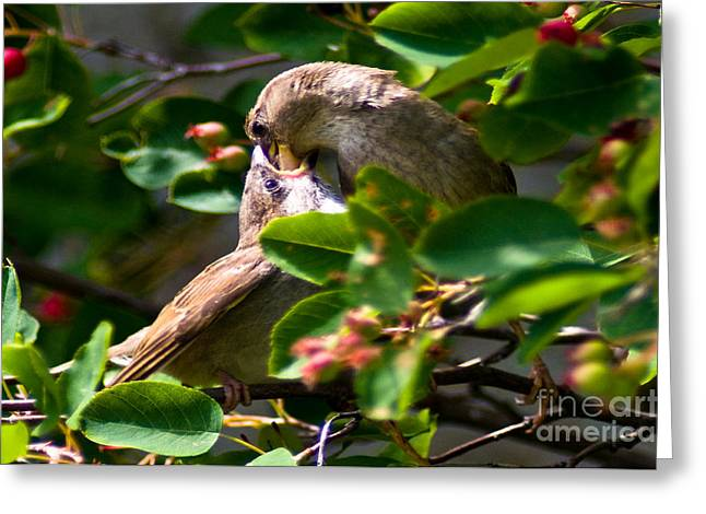 Feeding Her Young Greeting Card by Terry Elniski