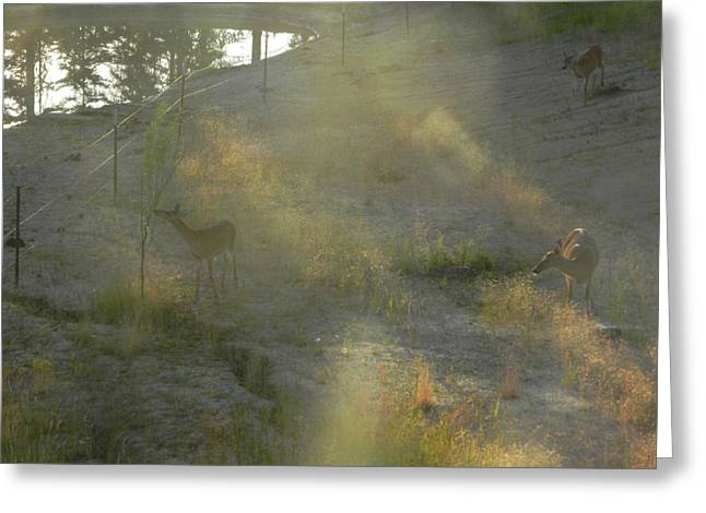 Greeting Card featuring the photograph Feeding In Light Of Early Morning by Debbi Saccomanno Chan