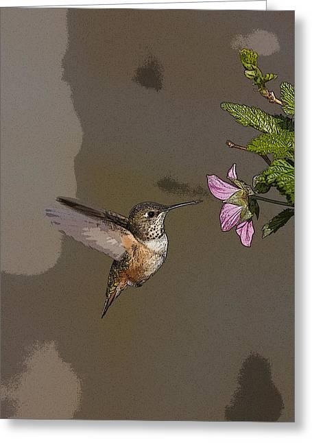 Feeding Rufus Hummingbird- Abstract Greeting Card by Tim Grams