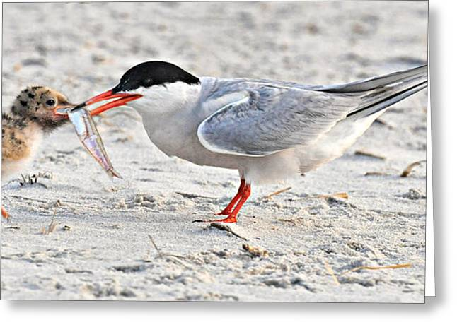 Feeding Time Greeting Card by Dave Mills