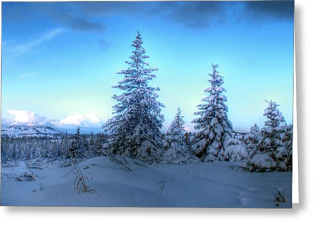 Greeting Card featuring the photograph Feeling Blue by Michele Cornelius