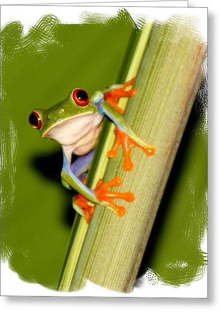 Greeting Card featuring the photograph Feeling Froggy by Myrna Bradshaw