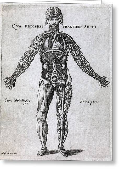 Female Anatomy, 17th Century Artwork Greeting Card by Middle Temple Library