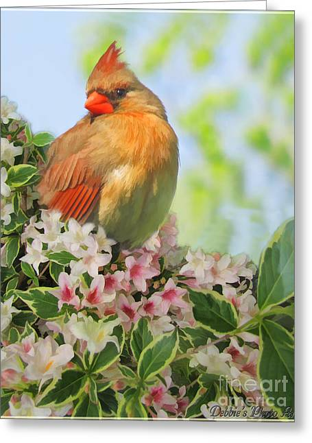 Greeting Card featuring the photograph Female Cardnial In Wegia Digital Art by Debbie Portwood