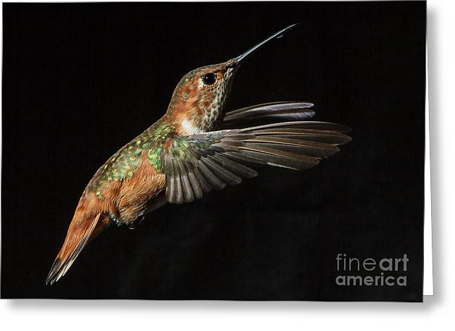 Female In Flight  II Greeting Card by Carl Jackson