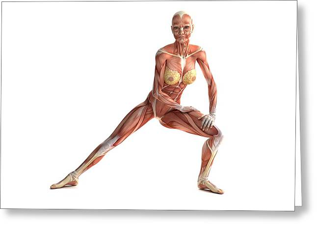 Female Muscles, Artwork Greeting Card by Sciepro
