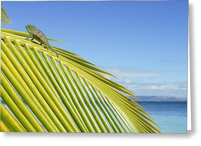 Female Oustalet's Chameleon Greeting Card by Alexis Rosenfeld