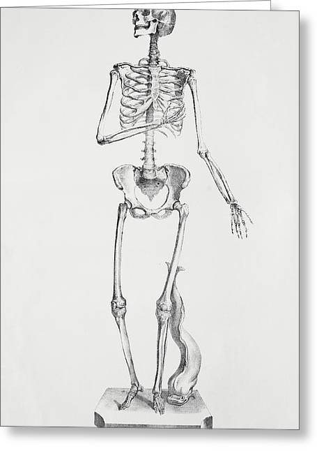 Female Skeleton Greeting Card by Sheila Terry