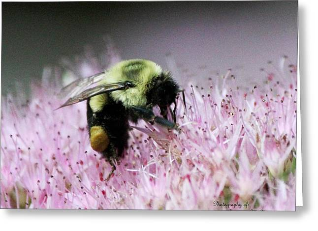 Female Worker Bumble Bee With Pollen Sack On Hen And Chick Plant Greeting Card by Suzanne  McClain