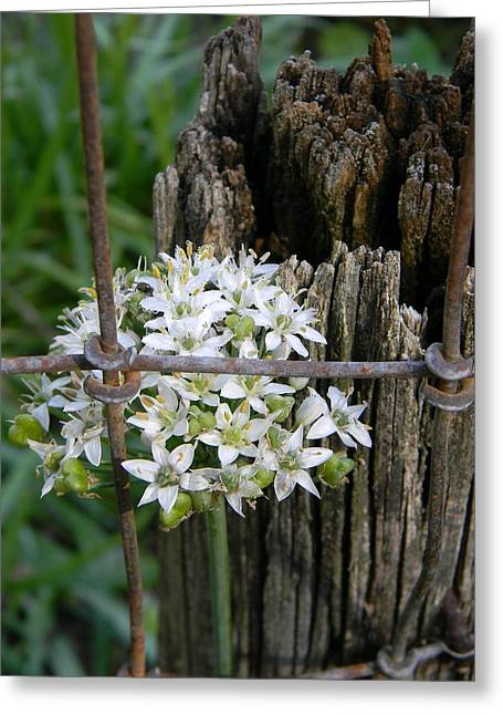 Fence And Flower Greeting Card by Warren Thompson