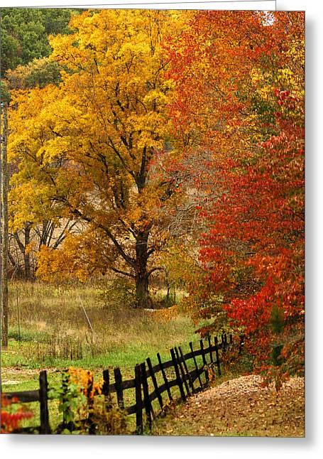 Fence In Autumn Greeting Card by Randall Branham
