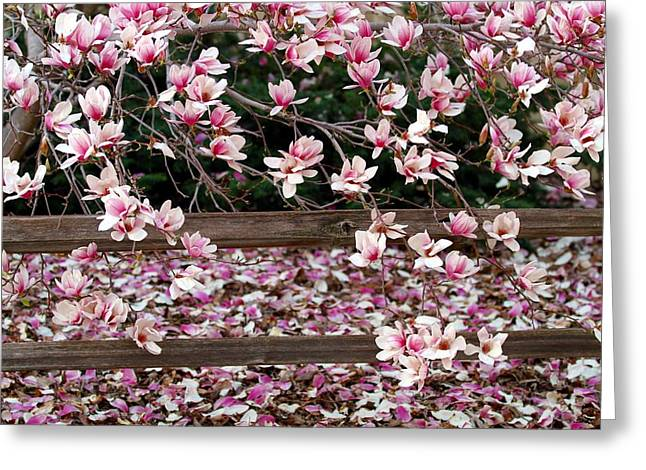 Greeting Card featuring the photograph Fence Of Flowers by Elizabeth Winter