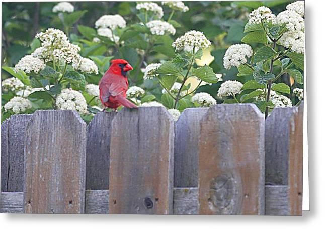 Greeting Card featuring the photograph Fence Top by Elizabeth Winter