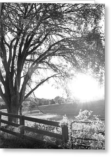Fenced In Greeting Card by Victoria Lawrence