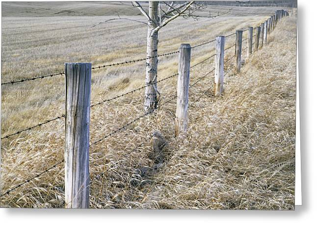 Fenceline And Cropland In Late Fall Greeting Card by Darwin Wiggett