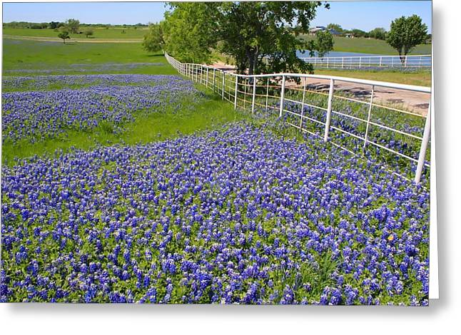 Greeting Card featuring the photograph Fenceline Flowers by Lynnette Johns