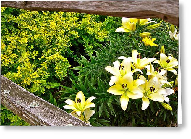 Fenceline Yielding To Yellow Greeting Card