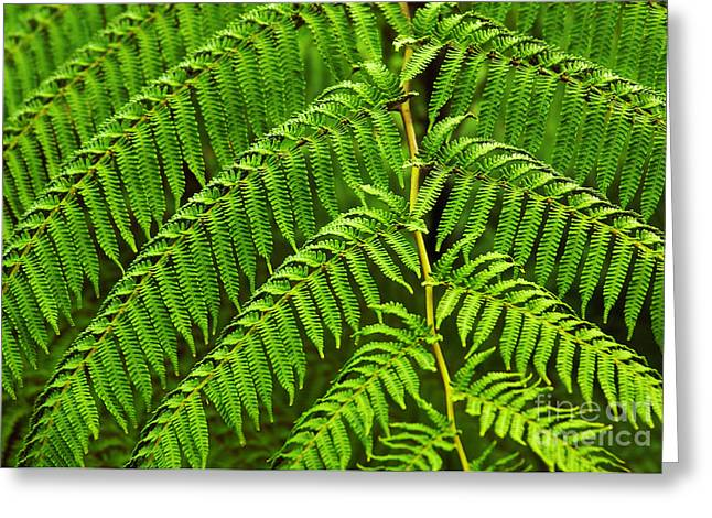 Fern Fronds Greeting Card by Carlos Caetano