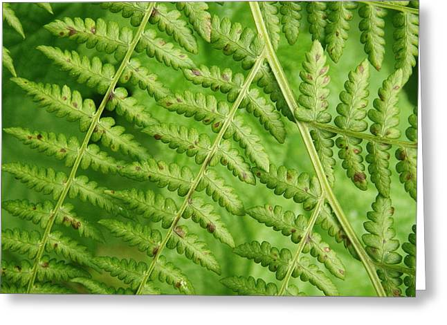 Fern Green Greeting Card
