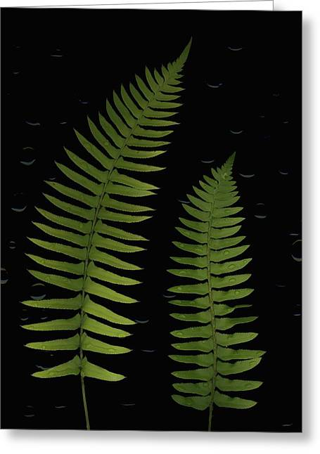 Fern Leaves With Water Droplets Greeting Card by Deddeda
