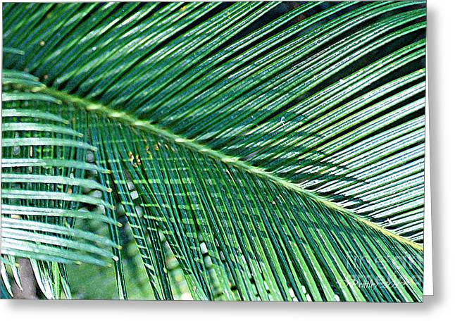 Ferns 56 Greeting Card